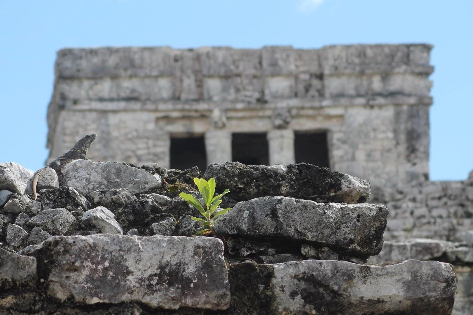 sito archeologico tulum messico