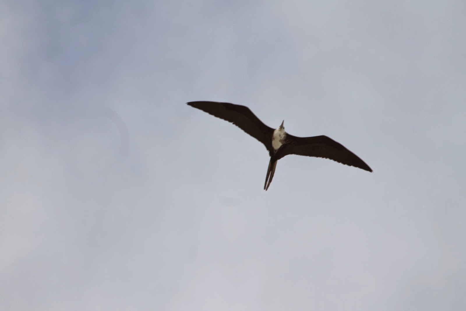 cormorani tulum messico