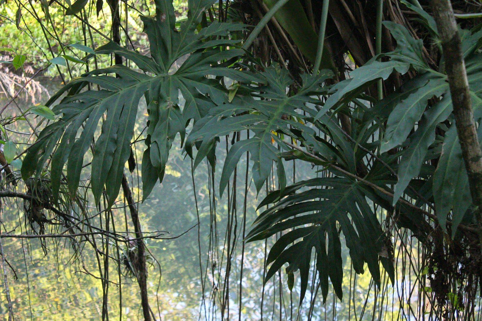foresta rio dulce guatemala