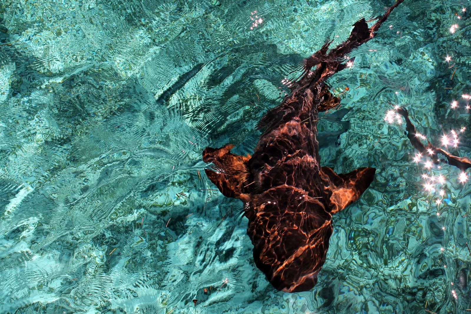 belize squalo
