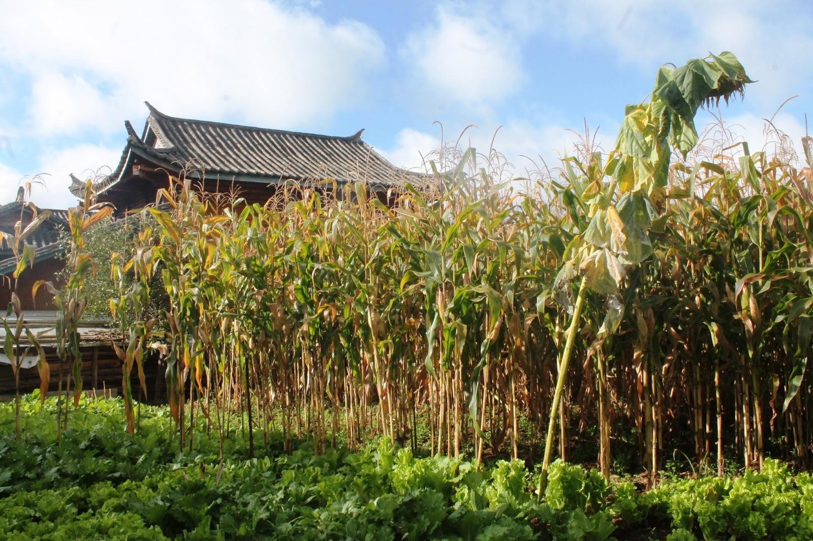 villaggio lugu hu sichuan cina