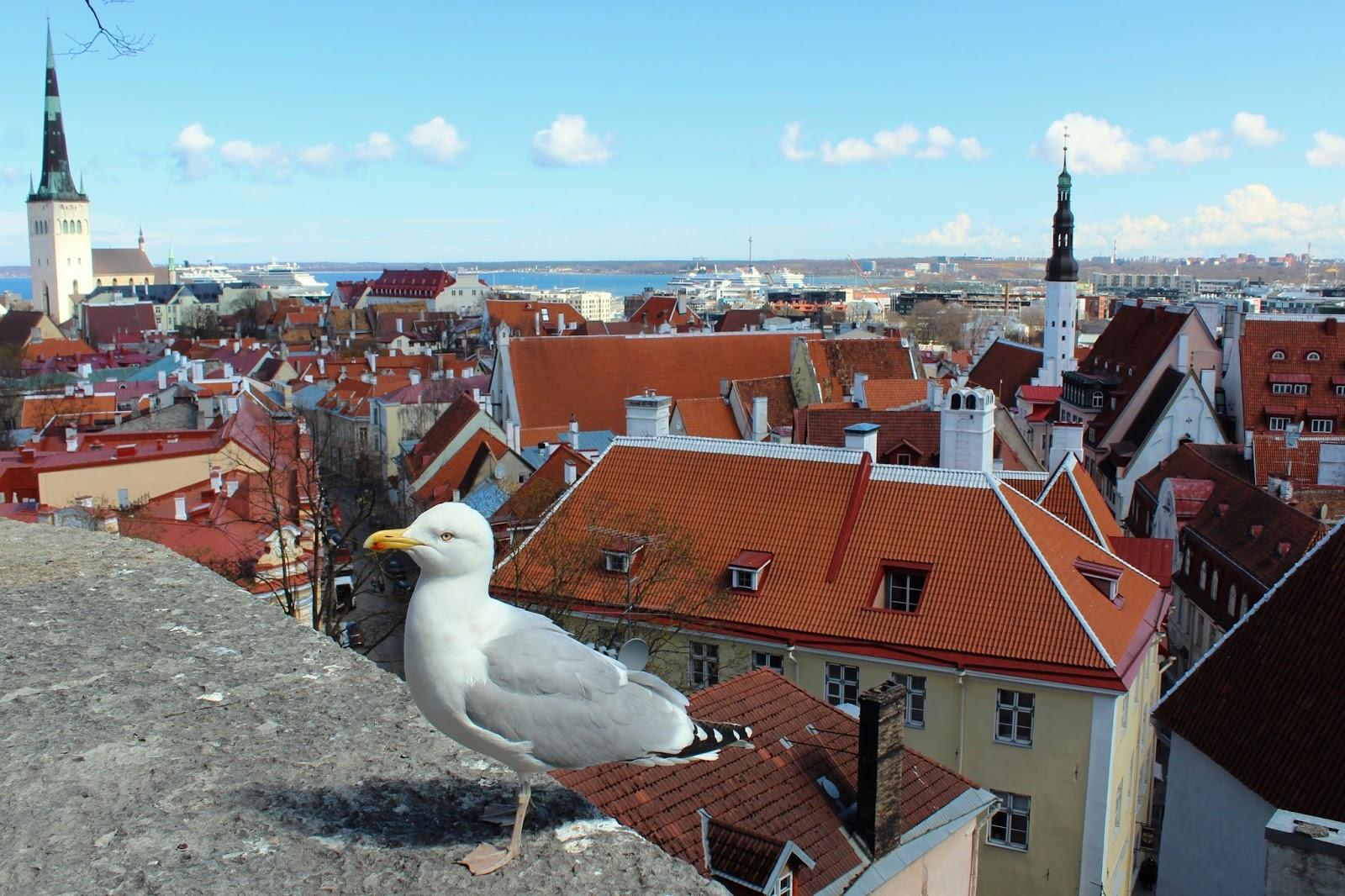 Tallinn in 48h… Il mio itinerario!