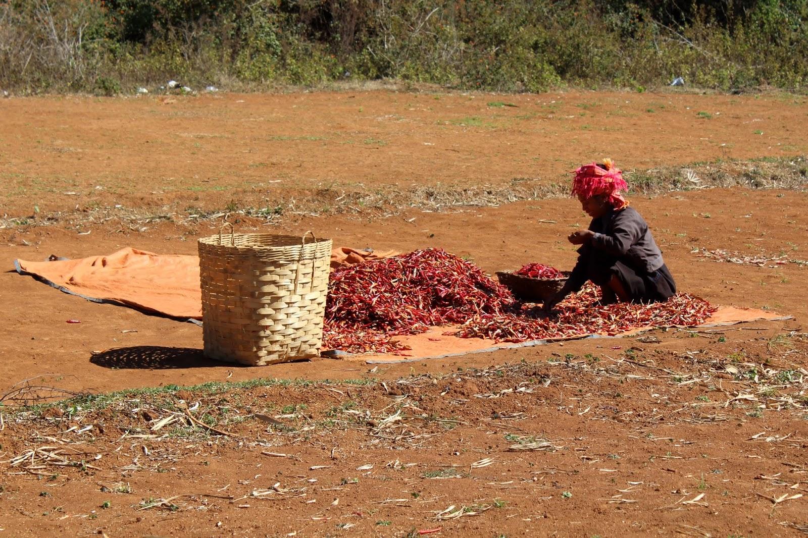 donna sentiero kalaw inle birmania