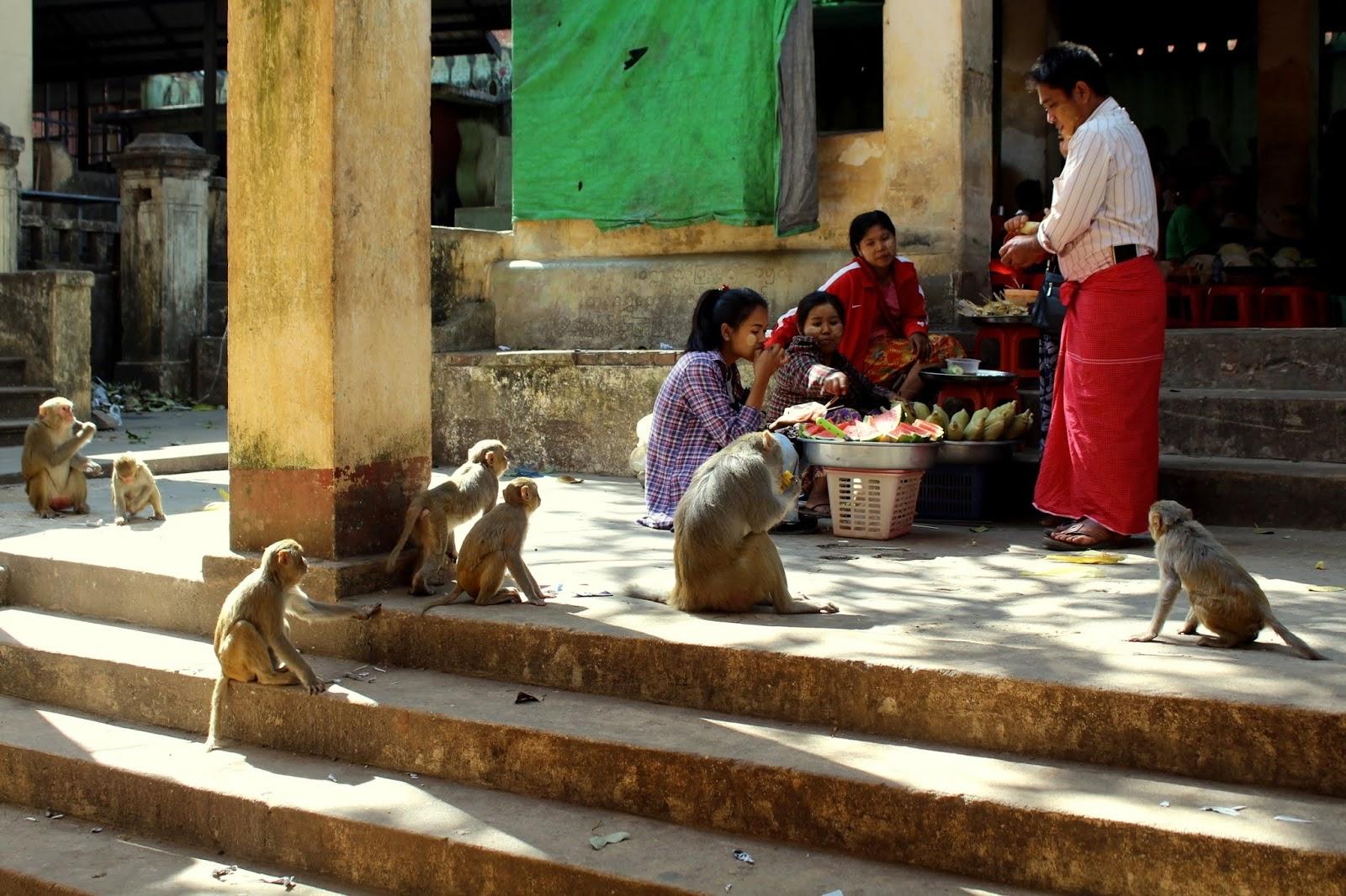 salita monte popa myanmar