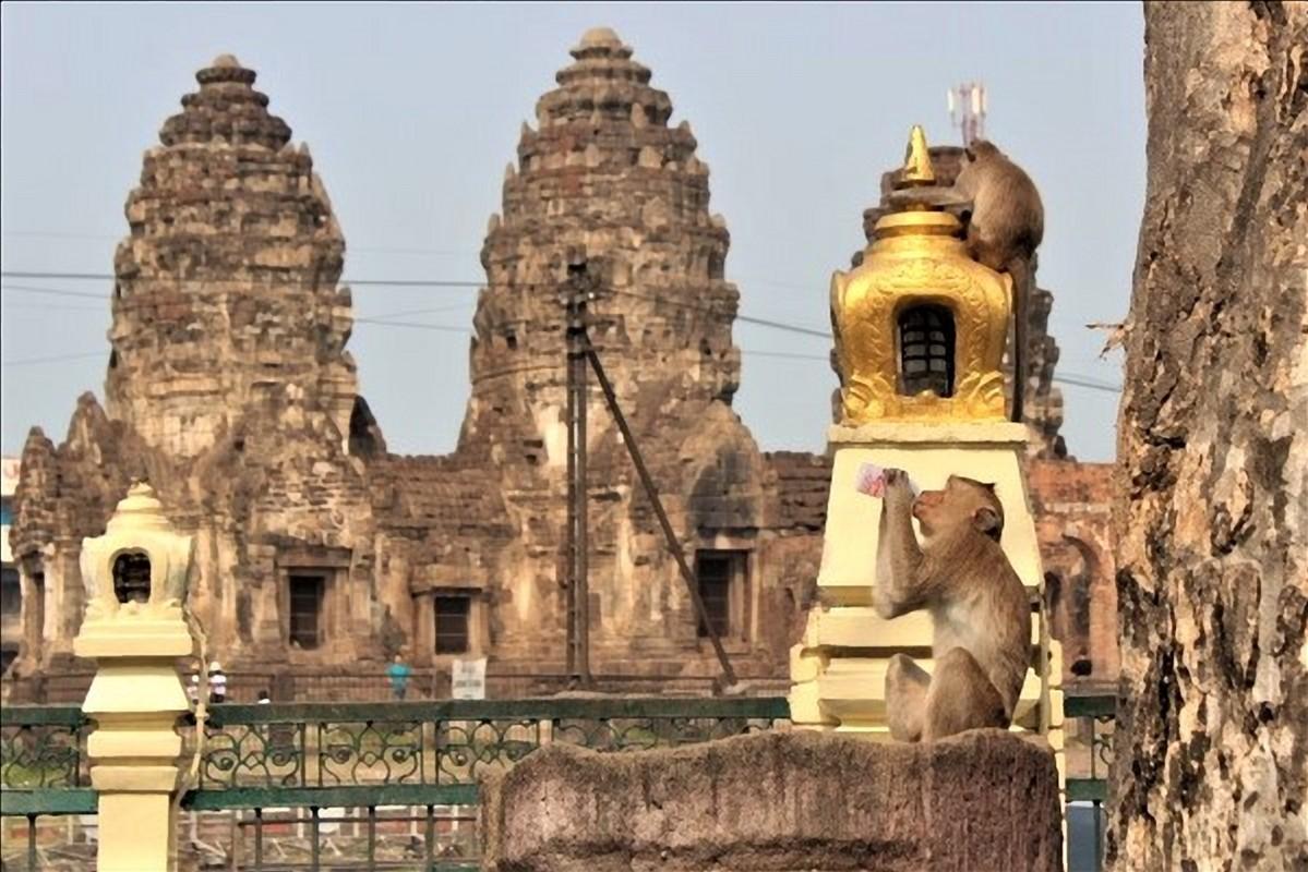lopburi scimmie thailandia