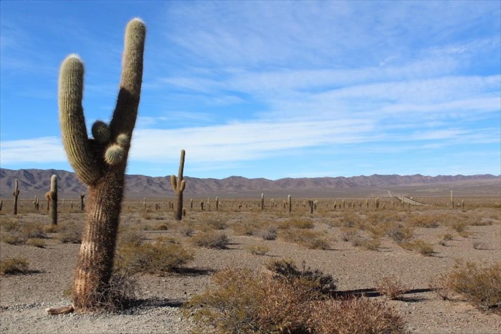 parco nazionale los cardones nord-ovest argentina