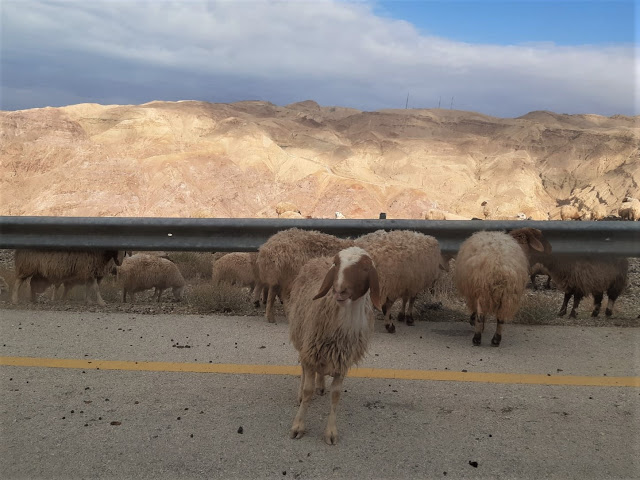 Per strada in giordania itinerario viaggio