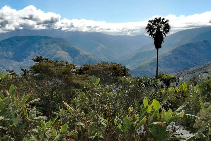 dintorni la paz coroico yungas bolivia