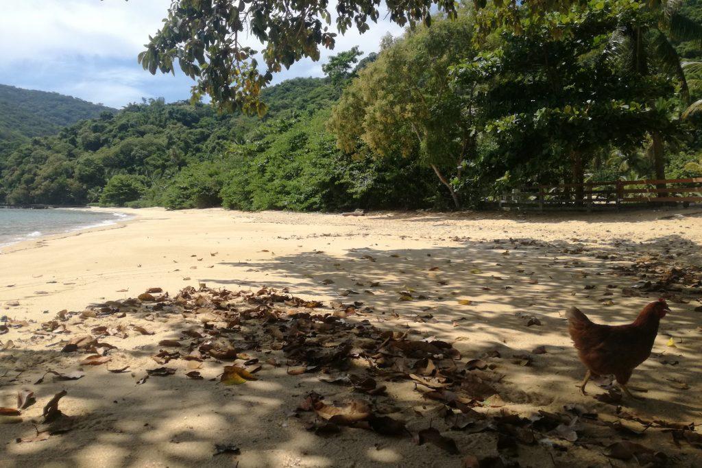 Ilha Grande Praia Feiticeira