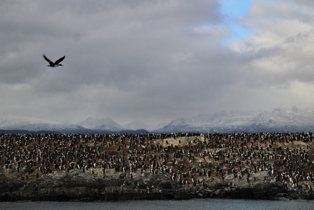 Cormorani, Isla de los Pajaros - Crociera nel Canale di Beagle