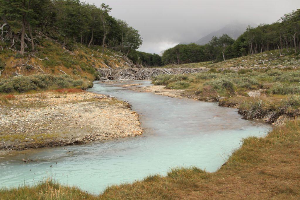 Dighe Castori lungo il fiume, Terra del Fuoco, Argentina