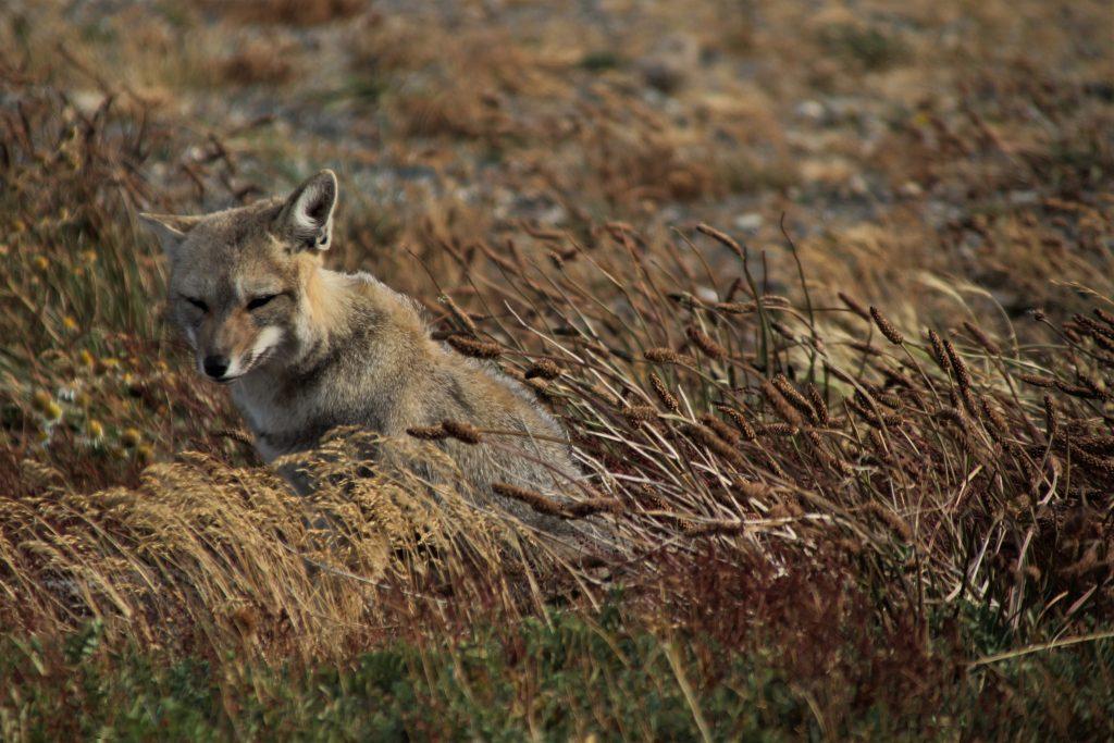 Parco Nazionale della Terra del Fuoco – Trekking ad Ushuaia