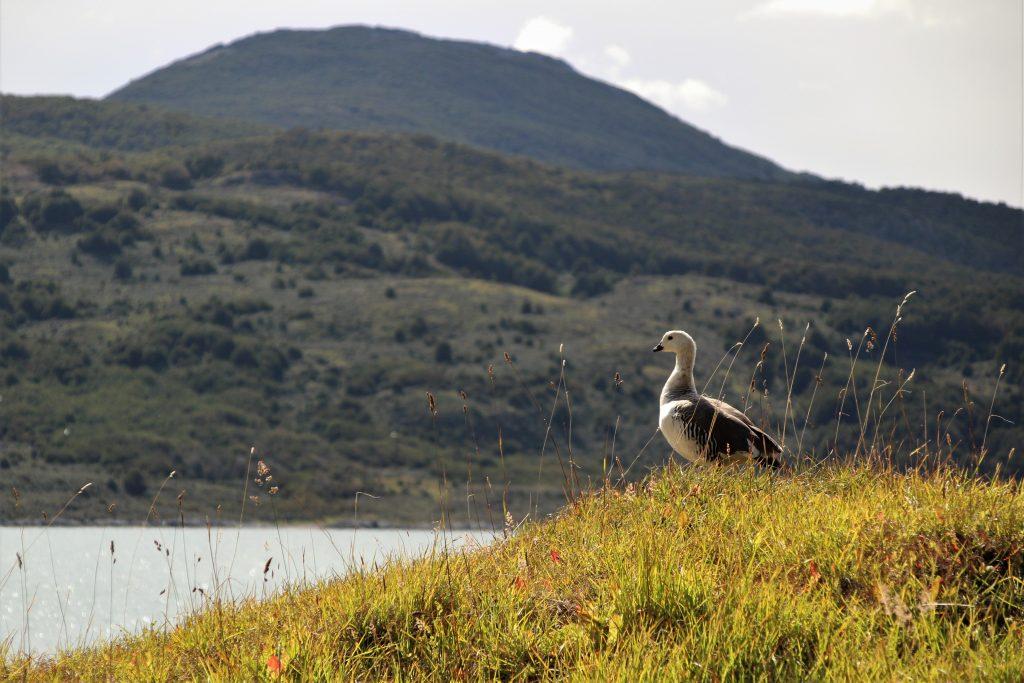 Animali Parco Nazionale della Terra del Fuoco