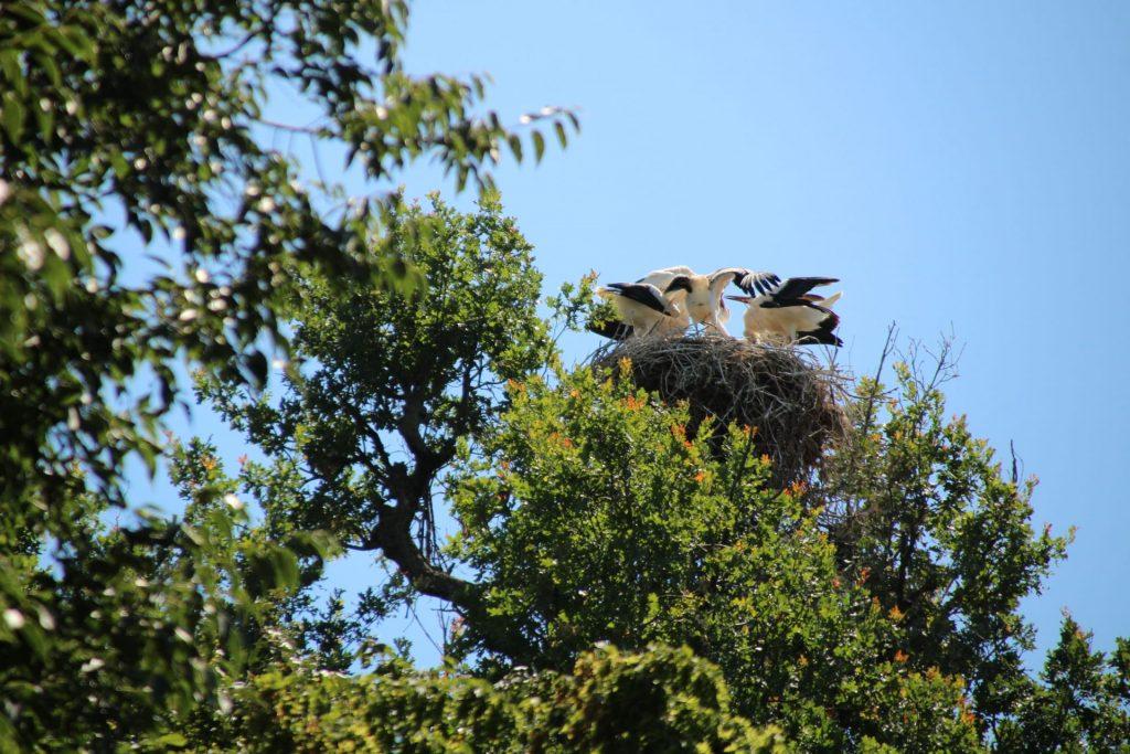 Cicogne del Parco delle Bertone