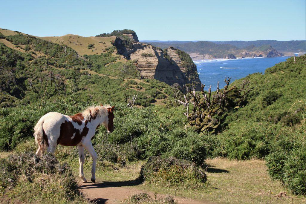 Cavallo di Chiloé