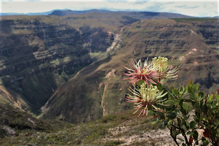 Cosa vedere a Chachapoyas - Canyon del Sonche