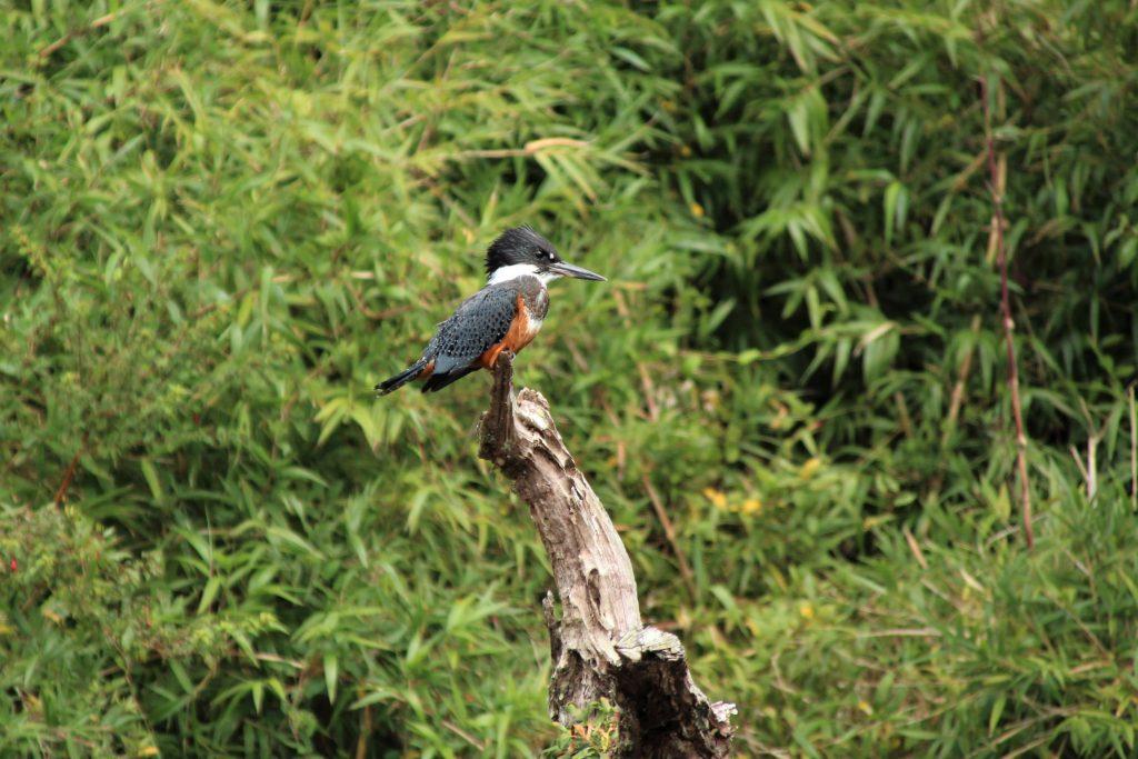 Cosa fare in Patagonia: Bird watching